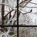MarioMa-uccelli-neve